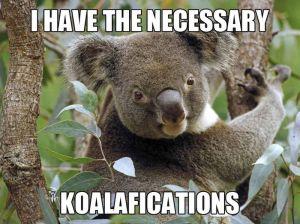 koalifications-meme-animals-zone